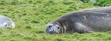 an-Antarctic-Quest-2009-01-28_DSC_5701.jpg
