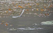 an-Antarctic-Quest-2009-01-28_DSC_5841.jpg