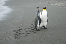 an-Antarctic-Quest-2009-01-29_DSC_5949.jpg