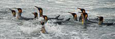 an-Antarctic-Quest-2009-01-29_DSC_5957.jpg