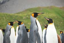 an-Antarctic-Quest-2009-01-29_DSC_6017.jpg