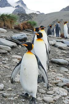 an-Antarctic-Quest-2009-01-29_DSC_6076.jpg
