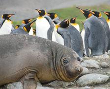 an-Antarctic-Quest-2009-01-29_DSC_6087.jpg