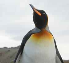 an-Antarctic-Quest-2009-01-29_DSC_6121.jpg