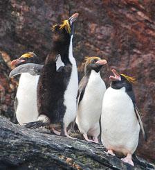 an-Antarctic-Quest-2009-01-29_DSC_6306.jpg
