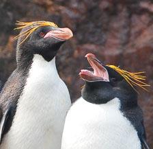 an-Antarctic-Quest-2009-01-29_DSC_6306_v1.jpg