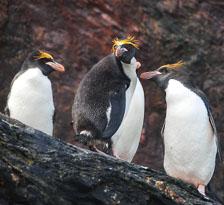 an-Antarctic-Quest-2009-01-29_DSC_6312.jpg
