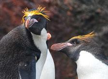 an-Antarctic-Quest-2009-01-29_DSC_6312_v1.jpg