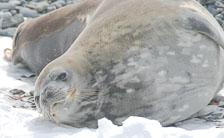 an-Antarctic-Quest-2009-02-02_DSC_7294.jpg