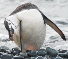 an-Antarctic-Quest-2009-02-02_DSC_7332.jpg