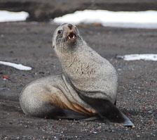 an-Antarctic-Quest-2009-02-02_DSC_7764.jpg