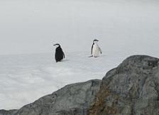 an-Antarctic-Quest-2009-02-03_DSC_8175.jpg