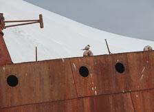 an-Antarctic-Quest-2009-02-03_DSC_8193.jpg