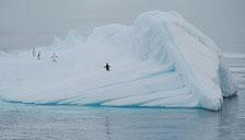 an-Antarctic-Quest-2009-02-03_DSC_8348.jpg