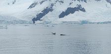 an-Antarctic-Quest-2009-02-03_DSC_8366.jpg