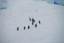 an-Antarctic-Quest-2009-02-03_DSC_8457.jpg