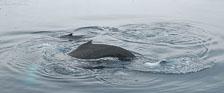 an-Antarctic-Quest-2009-02-03_DSC_8506.jpg