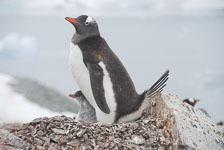 an-Antarctic-Quest-2009-02-03_DSC_8767.jpg