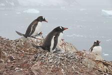 an-Antarctic-Quest-2009-02-03_DSC_8869.jpg