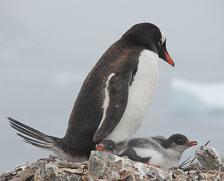 an-Antarctic-Quest-2009-02-03_DSC_8872.jpg