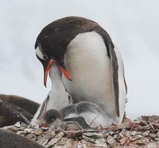 an-Antarctic-Quest-2009-02-03_DSC_8913.jpg