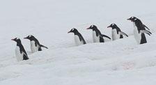 an-Antarctic-Quest-2009-02-03_DSC_8971.jpg