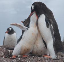 an-Antarctic-Quest-2009-02-03_DSC_9074.jpg