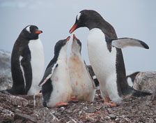 an-Antarctic-Quest-2009-02-03_DSC_9083.jpg