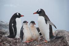 an-Antarctic-Quest-2009-02-03_DSC_9091.jpg