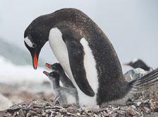 an-Antarctic-Quest-2009-02-03_DSC_9111.jpg