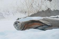 an-Antarctic-Quest-2009-02-03_DSC_9154.jpg