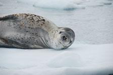an-Antarctic-Quest-2009-02-03_DSC_9185.jpg