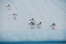 an-Antarctic-Quest-2009-02-03_DSC_9235.jpg