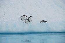 an-Antarctic-Quest-2009-02-03_DSC_9240.jpg