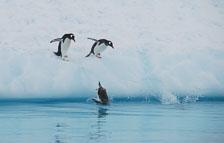 an-Antarctic-Quest-2009-02-03_DSC_9241.jpg