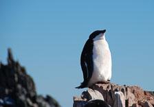 an-Antarctic-Quest-2009-02-04_DSC_0004.jpg