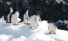 an-Antarctic-Quest-2009-02-04_DSC_0059.jpg