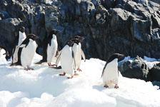 an-Antarctic-Quest-2009-02-04_DSC_0062.jpg
