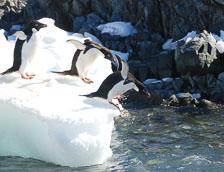 an-Antarctic-Quest-2009-02-04_DSC_0084.jpg