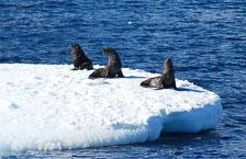 an-Antarctic-Quest-2009-02-04_DSC_9600.jpg