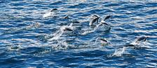an-Antarctic-Quest-2009-02-04_DSC_9625.jpg