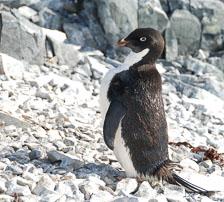 an-Antarctic-Quest-2009-02-04_DSC_9842.jpg