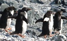 an-Antarctic-Quest-2009-02-04_DSC_9845.jpg