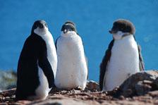 an-Antarctic-Quest-2009-02-04_DSC_9877.jpg