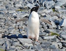 an-Antarctic-Quest-2009-02-04_DSC_9904.jpg