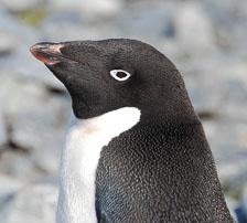 an-Antarctic-Quest-2009-02-04_DSC_9912.jpg