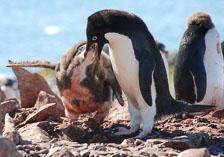 an-Antarctic-Quest-2009-02-04_DSC_9936.jpg