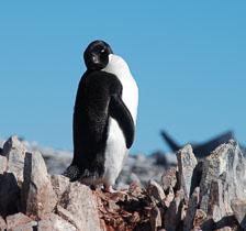 an-Antarctic-Quest-2009-02-04_DSC_9985.jpg