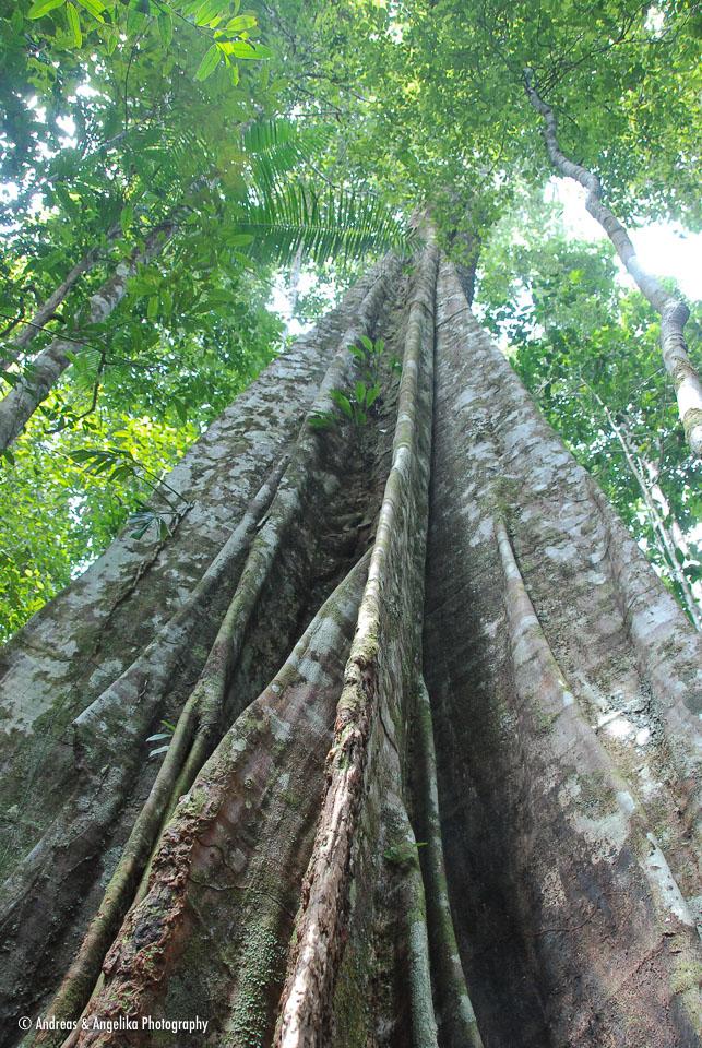 an-Cuyabeno-2009-12-30_DSC_0789.jpg