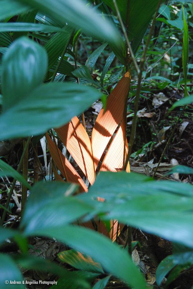 an-Cuyabeno-2009-12-30_DSC_0803.jpg
